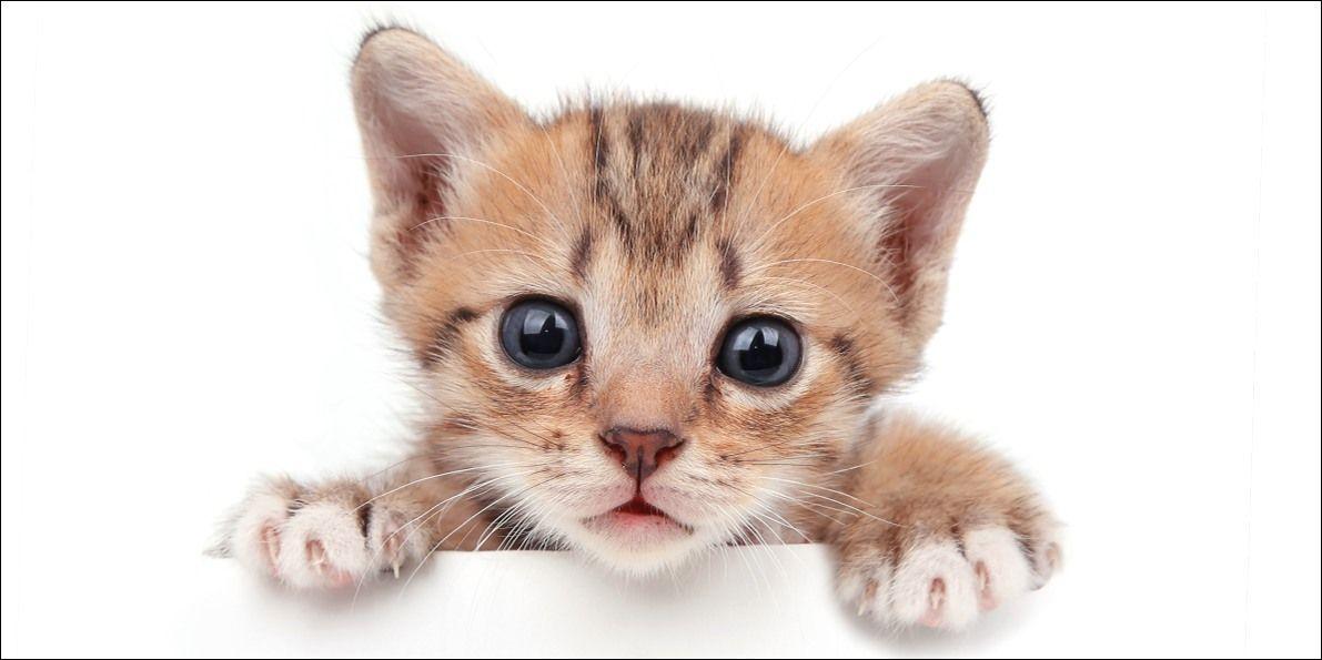 Obrázky, ak mačička
