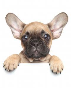 Mikroflanelová detská deka Puppy bulldog