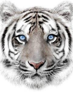 Mikroflanelová detská deka Biely tiger