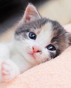 Mikroflanelová detská deka Koťátko