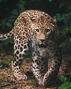 Mikroflanelová detská deka Leopard green